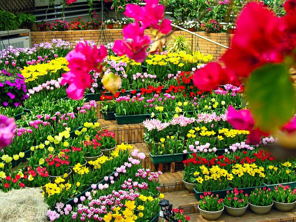 Hình ảnh những khu vườn đẹp