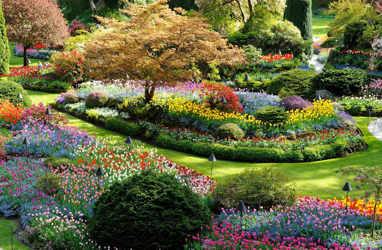 Hình ảnh những vườn hoa đẹp nhất