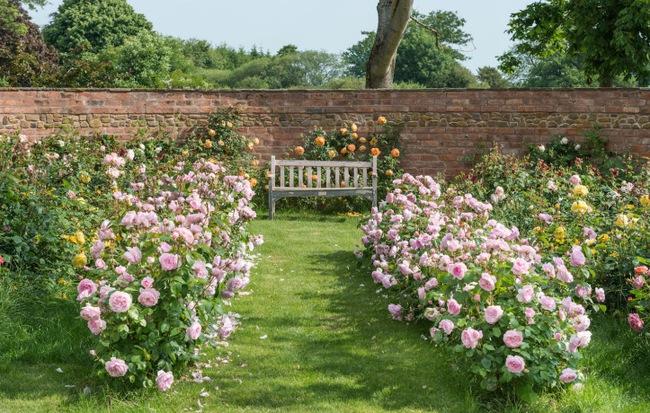 Hình ảnh vườn hoa hồng đẹp nhất