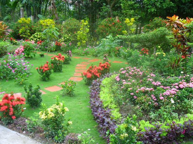 Hình ảnh vườn hoa nhiều màu sắc đẹp