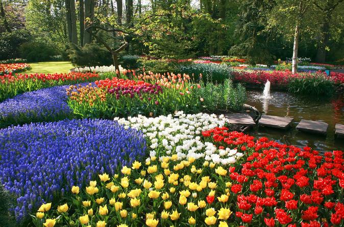 Hình ảnh vườn hoa rực rỡ sắc màu