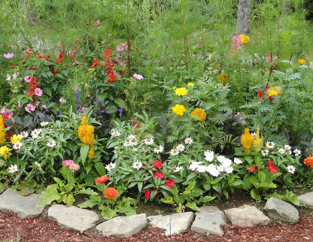 Hình vườn hoa cực đẹp