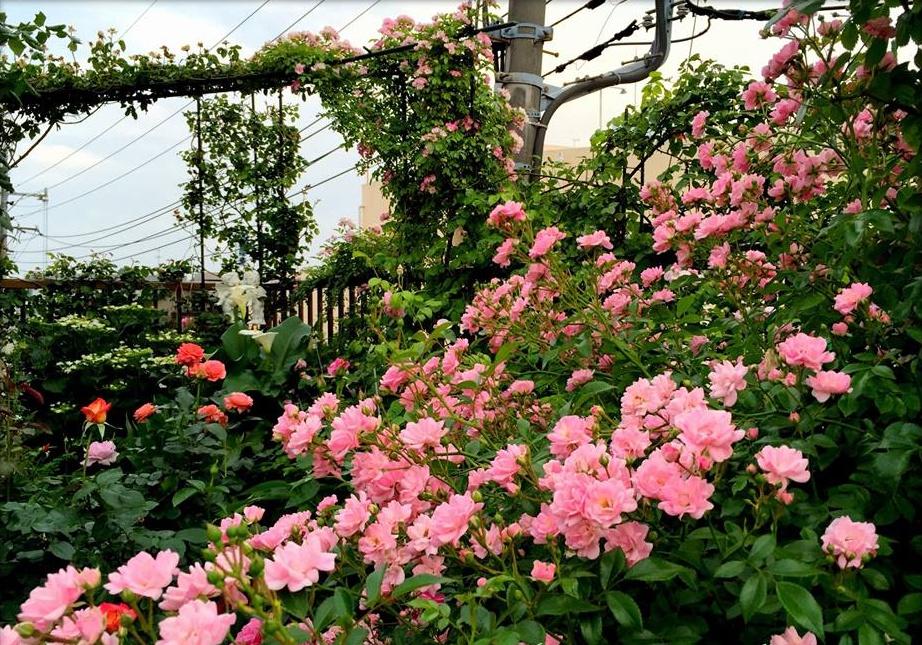 Khu vườn hoa