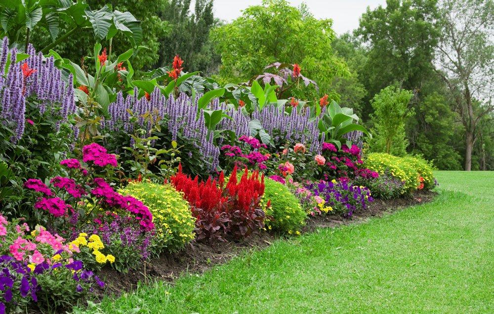Những bông hoa khoe sắc trong vườn hoa đẹp
