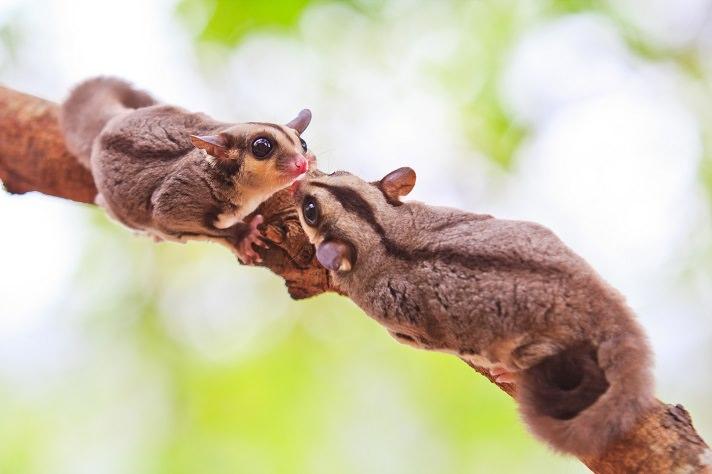 Những hình ảnh sóc bay cực đẹp