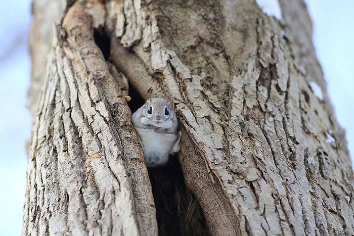 Những hình ảnh về chú sóc bay đáng yêu