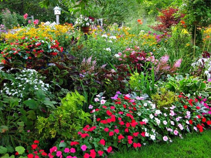 Những hình ảnh vườn hoa đẹp nhất