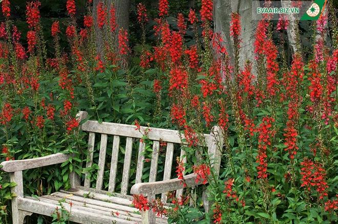 Những vườn hoa đẹp