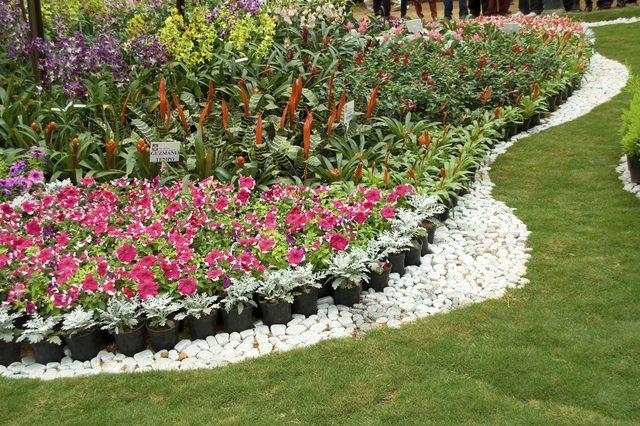 Tổng hợp hình ảnh vườn hoa đẹp nhất