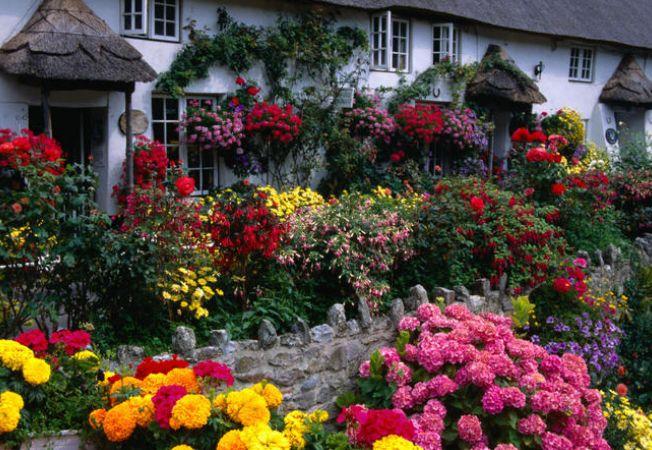 Vườn hoa cực đẹp
