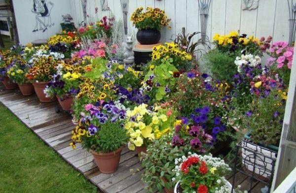 Vườn hoa nhỏ đẹp