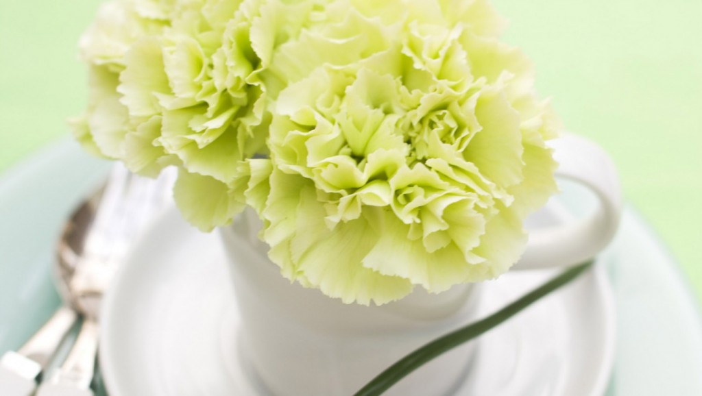 Cách gieo trồng và chăm sóc hoa Cầm Chướng