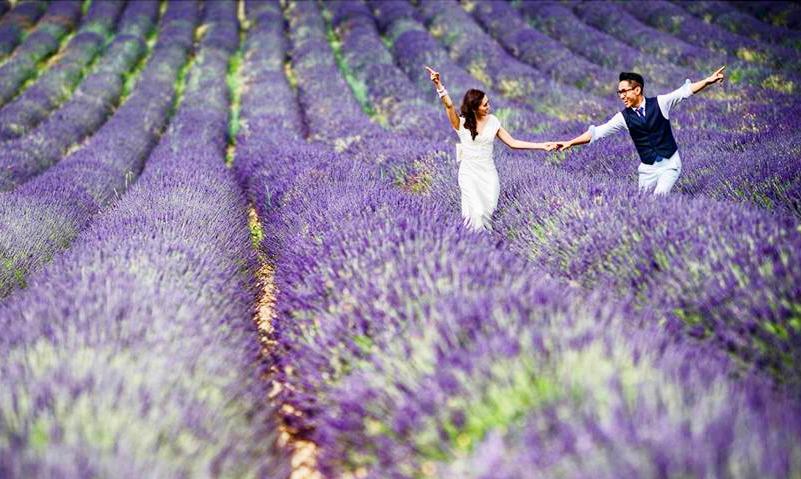Cánh đồng hoa Lavender đẹp xuất thần