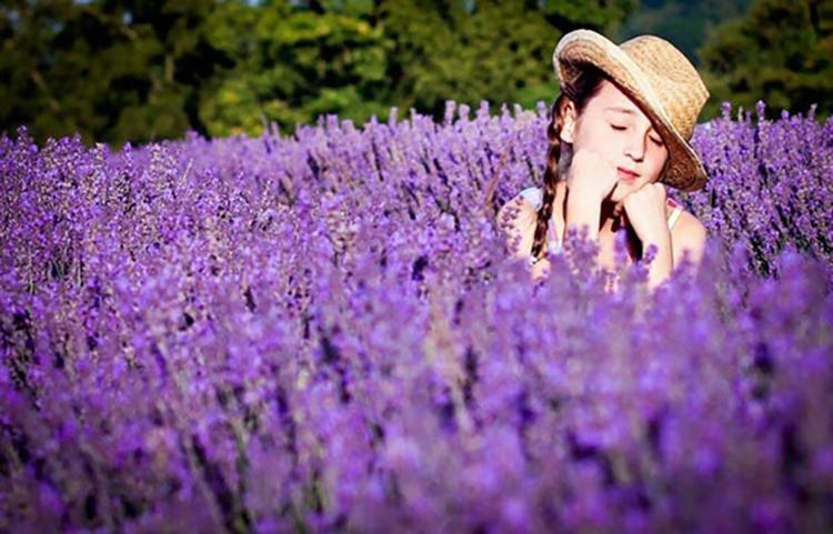 Có nên chọn hoa Lavender cho người yêu