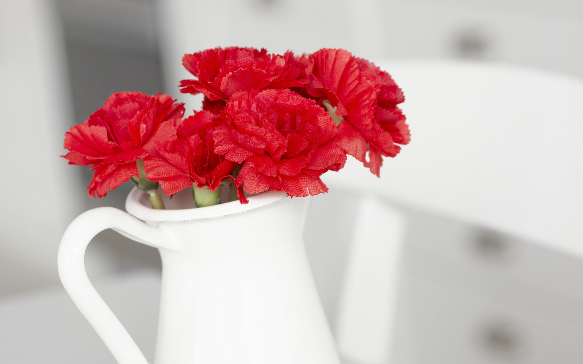 Cửa hàng bán hạt giống hoa Cẩm chướng