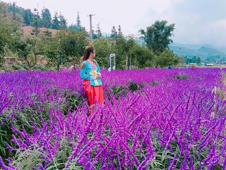 Cùng nhau check in tại thung lũng hoa Oải Hương
