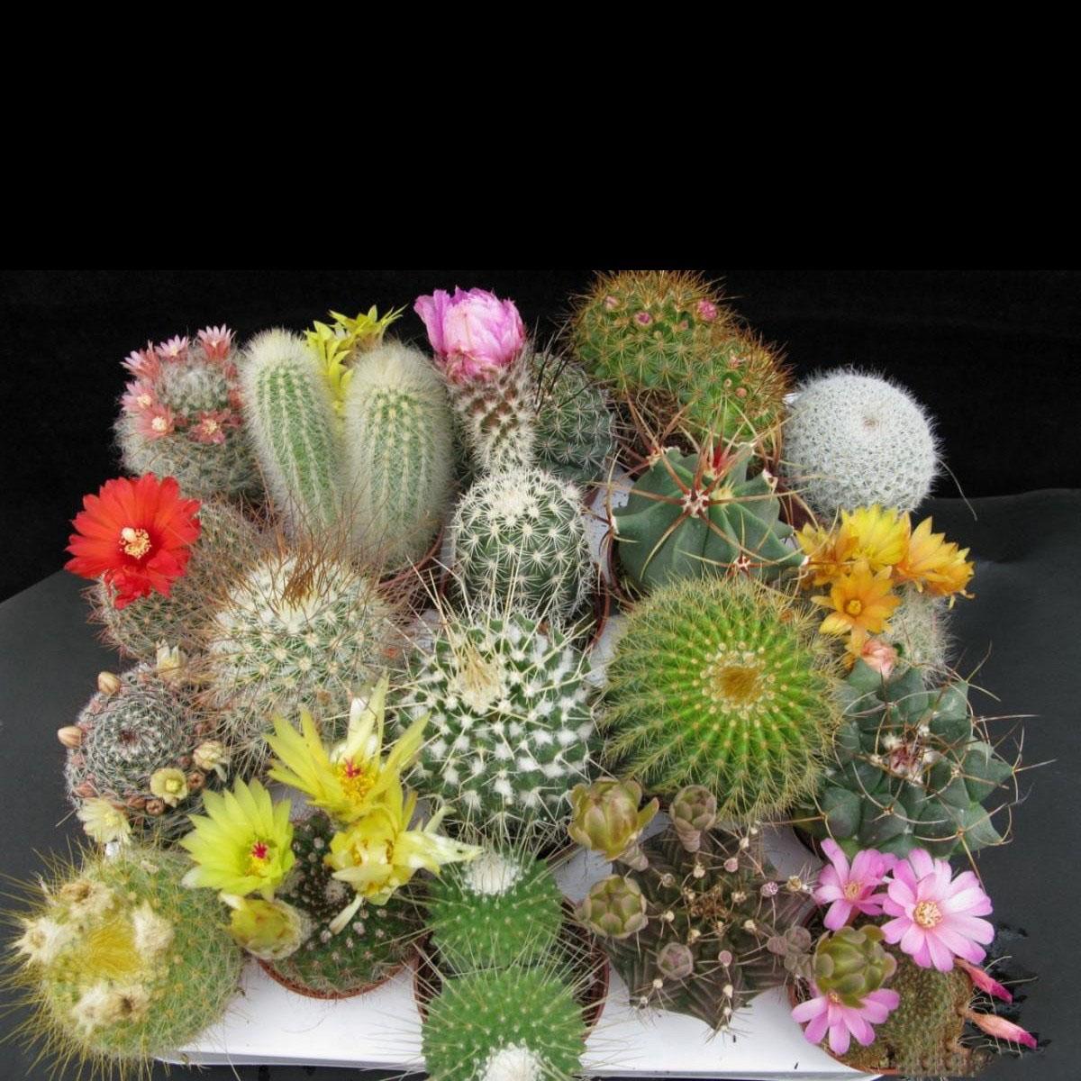 Địa điểm bán hạt giống cây hoa xương rồng