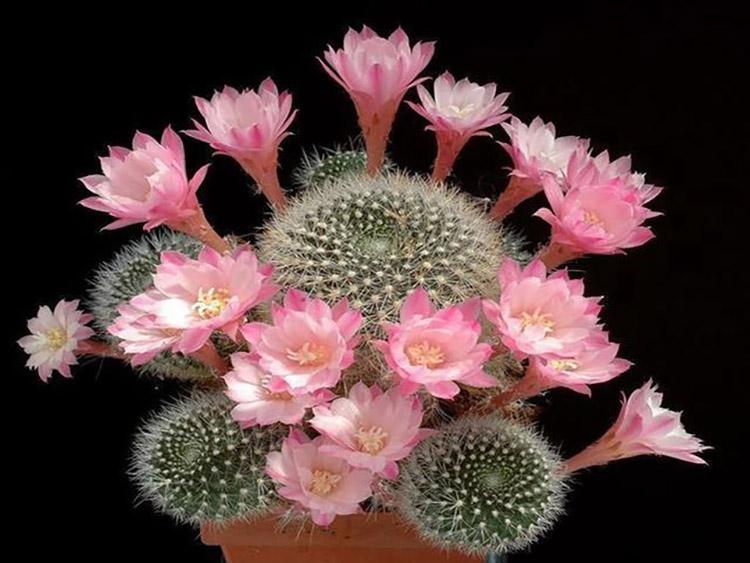 Hình ảnh đẹp nhất của hoa xương rồng