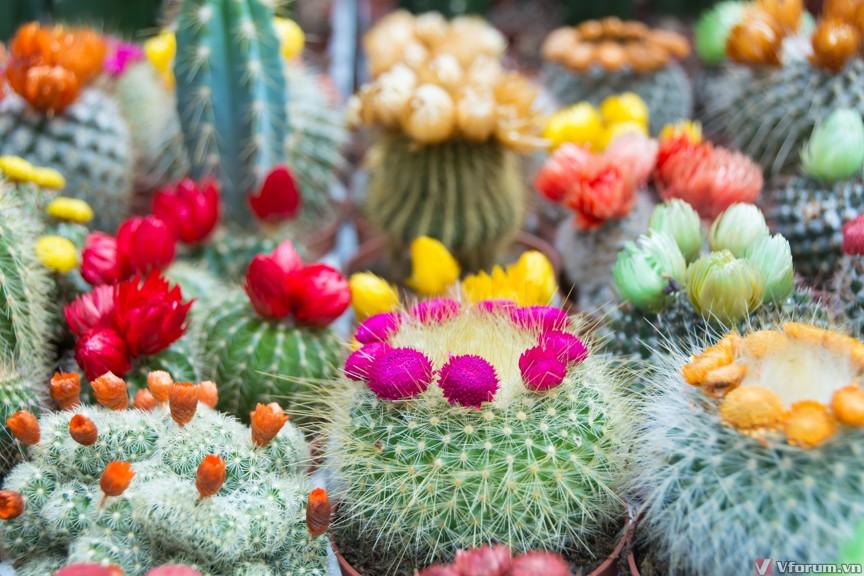 Hình ảnh hình nền cây hoa xương rồng đẹp