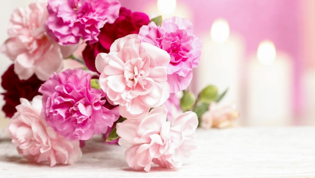 Hình ảnh hoa Cẩm chướng đẹp nhất