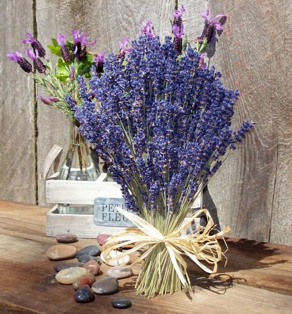 Hình ảnh hoa Oải Hương khô