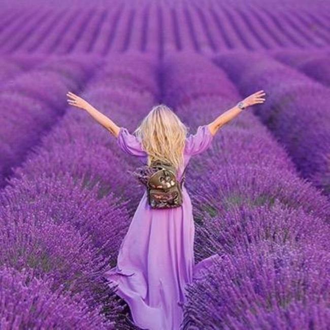 Hình ảnh những bông hoa Lavender