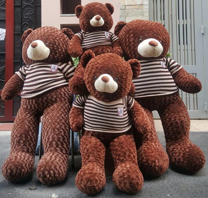 Hình ảnh những chú gấu bông đẹp nhất