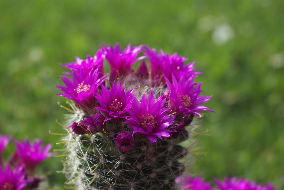 Hình ảnh thiên nhiên cây hoa xương rồng tuyệt đẹp