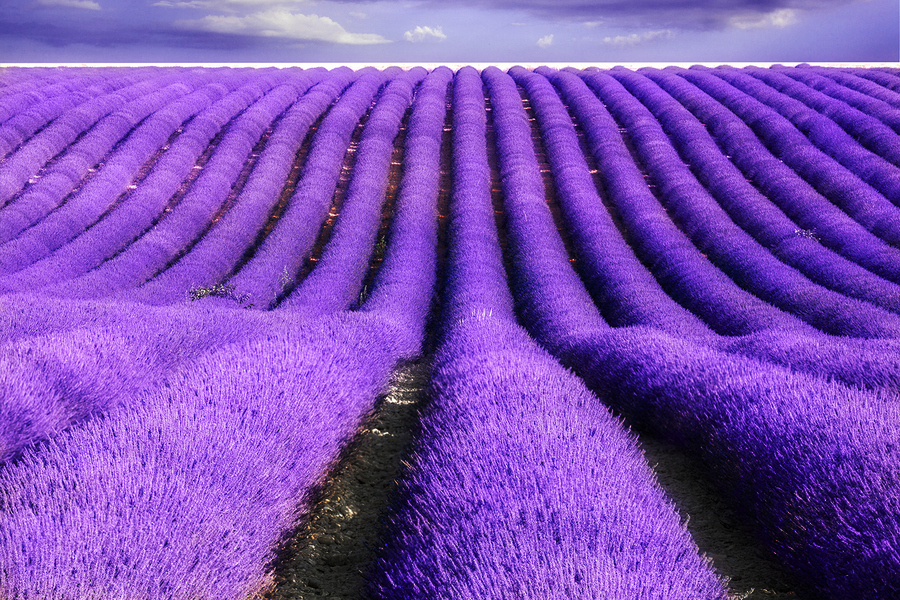 Hình ảnh tinh dầu hoa Lavender nguyên chất