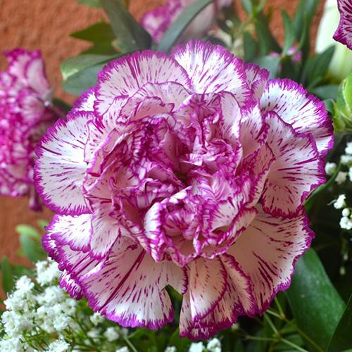 Hoa Cẩm chướng cầm tay cho cô dâu