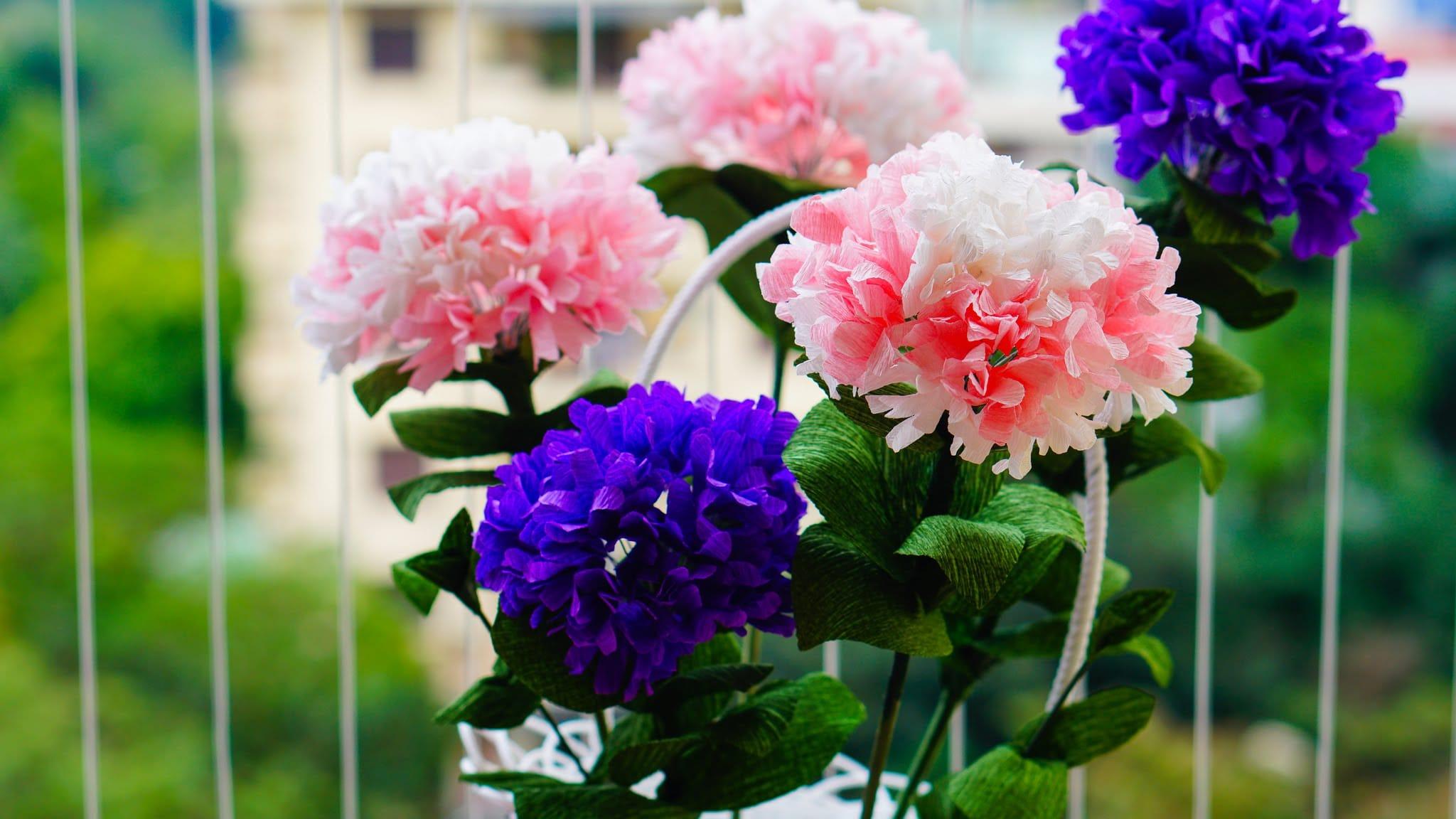 Hoa cẩm chướng nở khi nào đẹp nhất