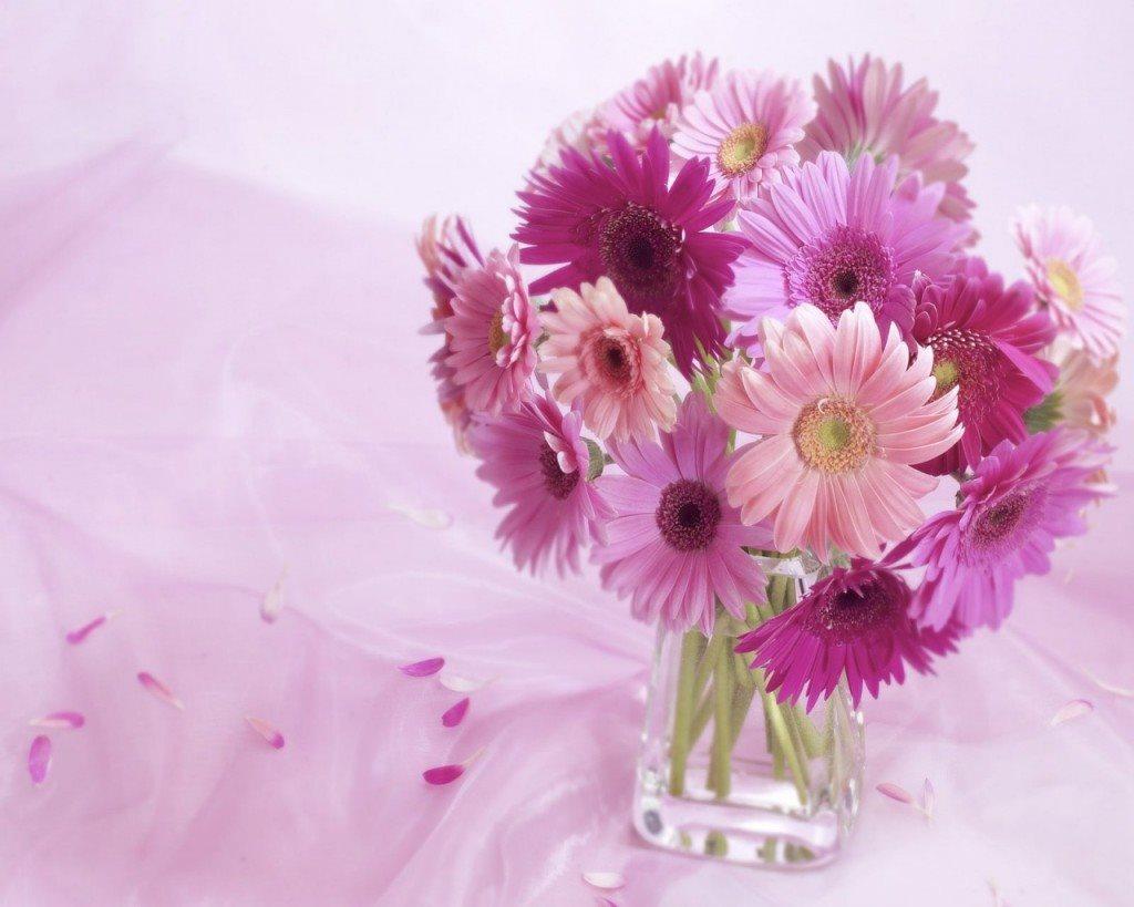 Hoa Cẩm chướng tặng cô giáo 20-11