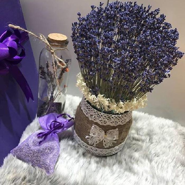 Hoa Lavender Pháp lưu hương 2 năm
