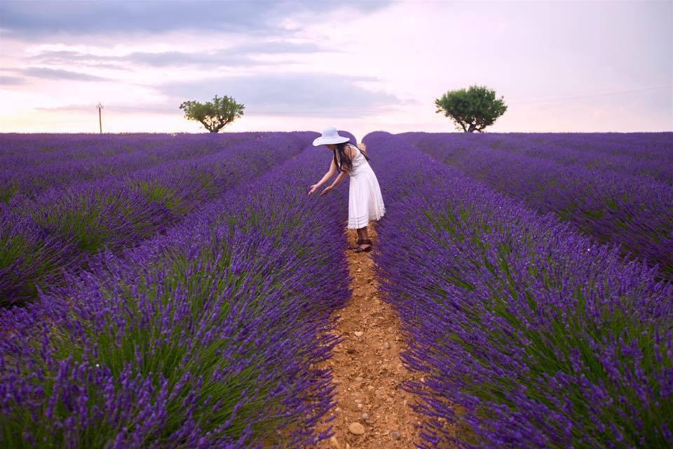Lavender Đà Lạt