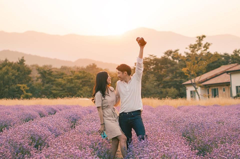 Mãn nhãn với cánh đồng hoa Oải Hương (Lavender)