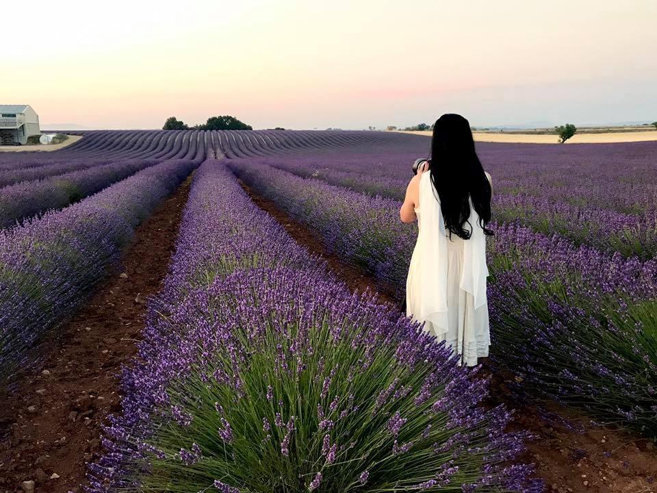 Ngẩn ngơ trước vẻ đẹp của cánh đồng Hoa Lavender