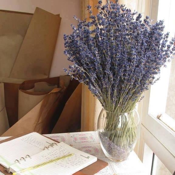 Shop hoa Lavender khô, hoa Oải Hương đẹp nhất