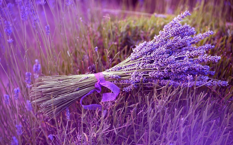 Sự tích Hoa Oải Hương lavender đẹp nhất