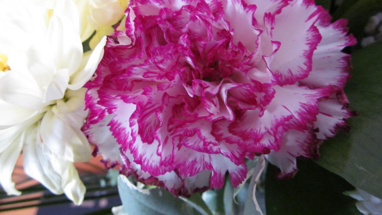 Tổng hợp những hình ảnh hoa Cẩm chướng đẹp nhất cho cô dâu