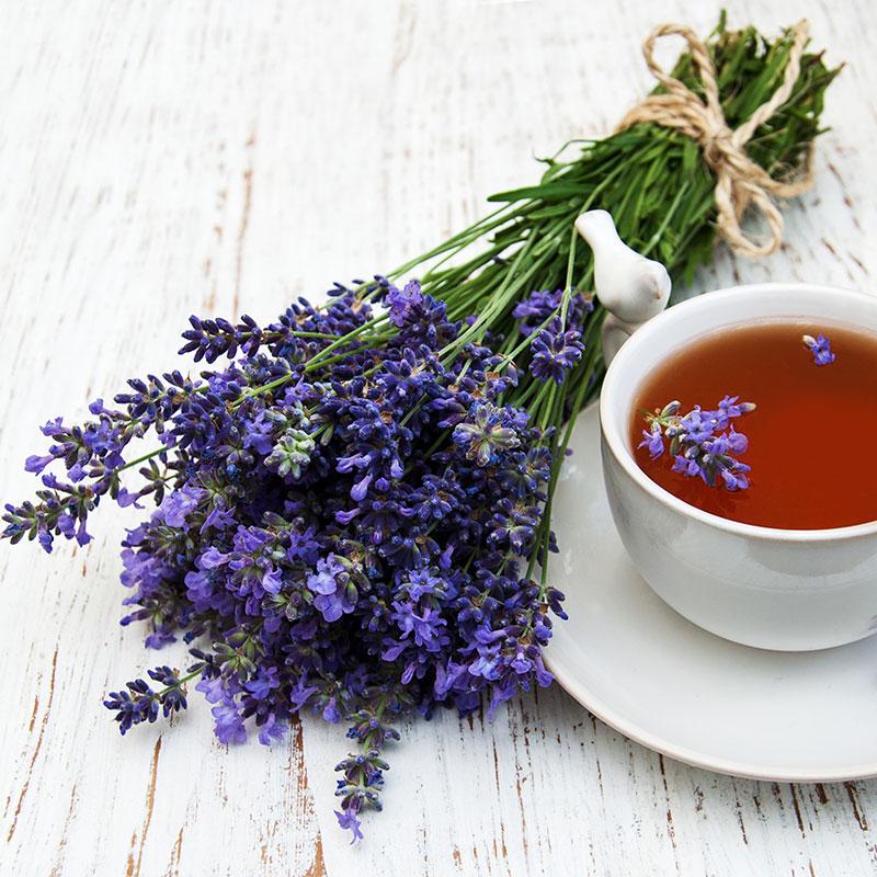 Trà được làm từ Lavender