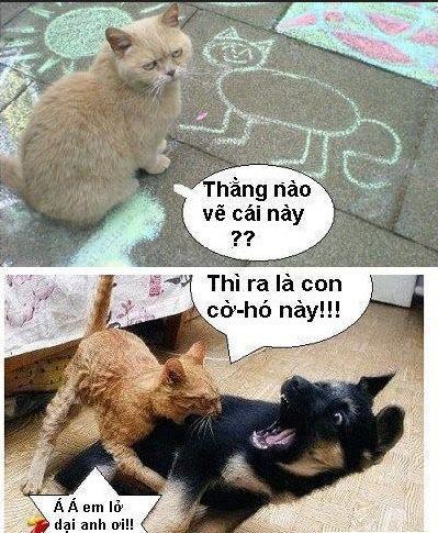 Hình ảnh hài hước nhất
