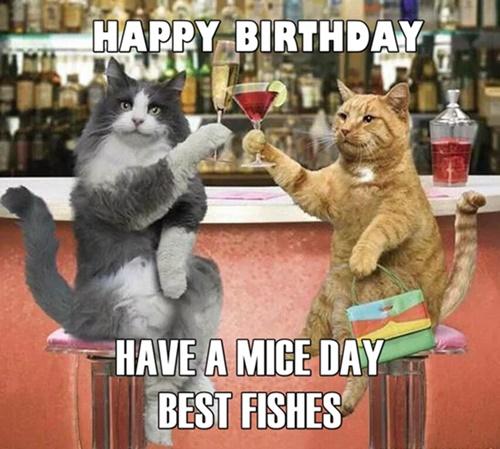 Hình chúc mừng sinh nhật hài hước
