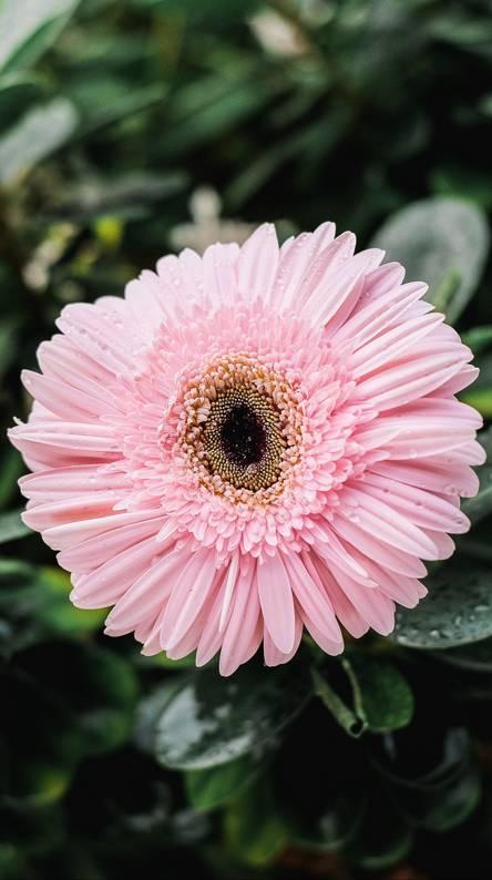 Hình nền điện thoại bông hoa