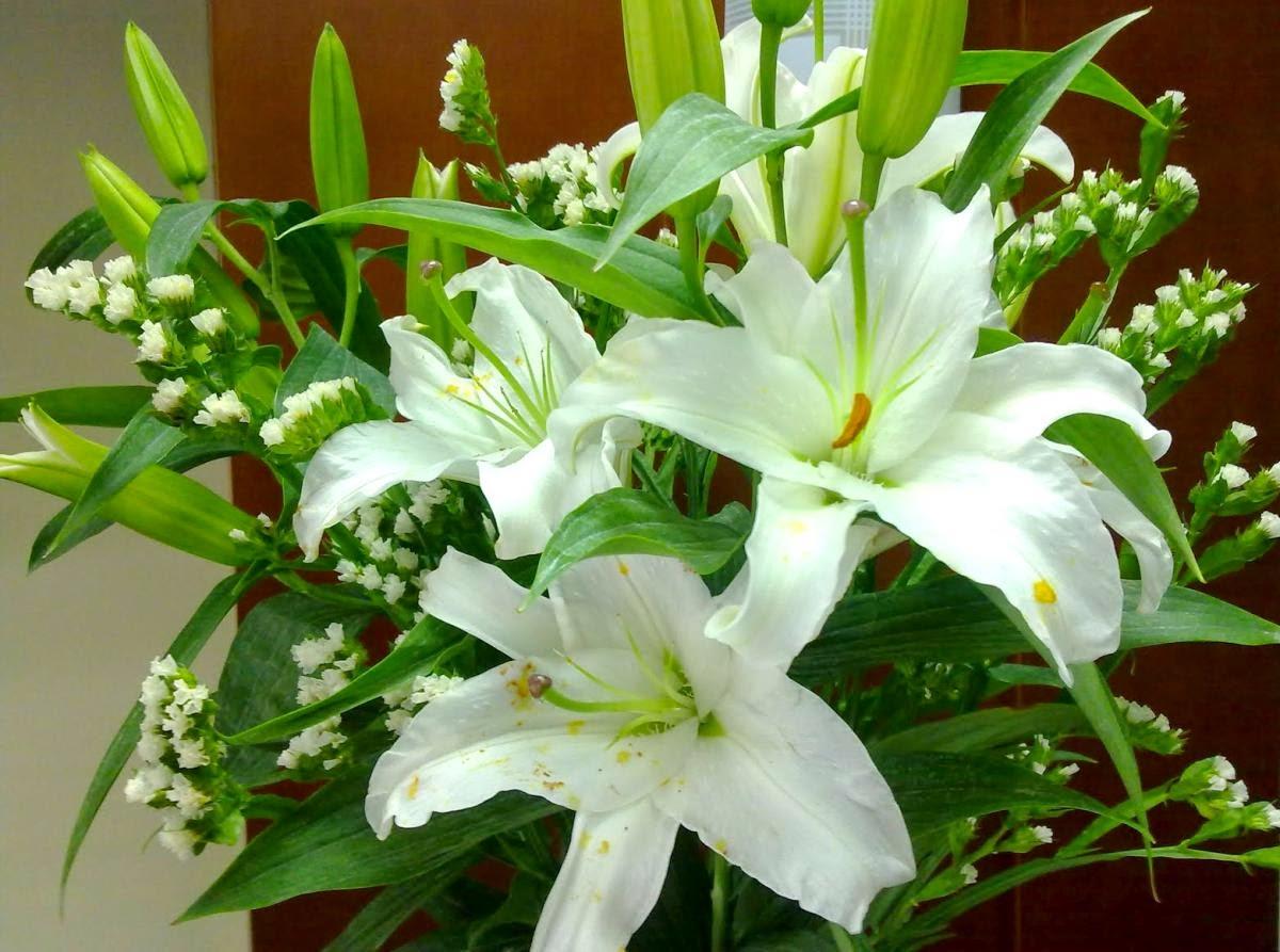 Hoa bách hợp sấy khô dùng để làm gì