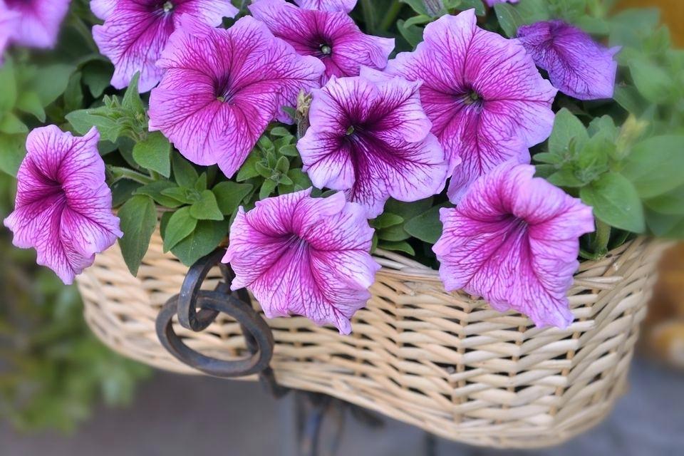 Giỏ hoa màu tím đẹp