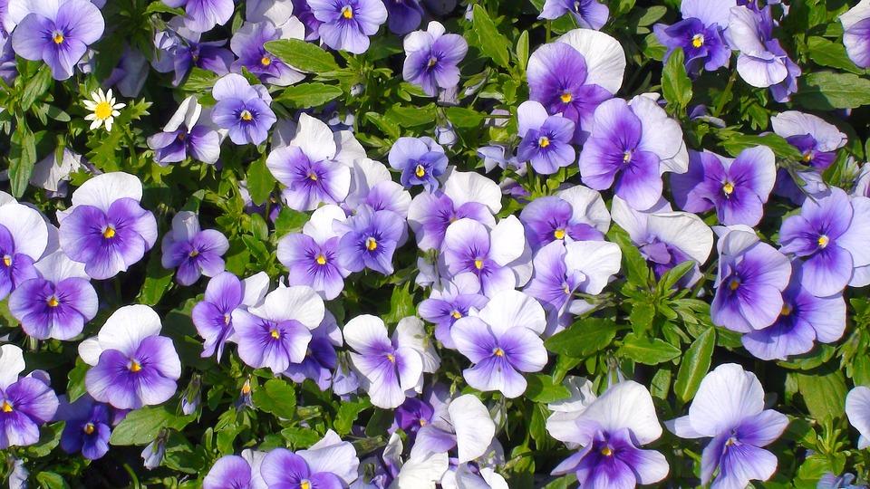 Hình ảnh hoa đẹp màu tím