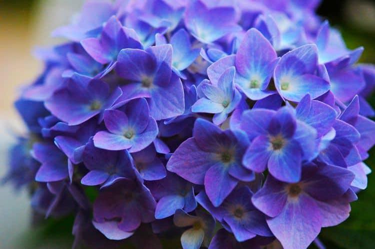 Hình ảnh hoa tím đẹp