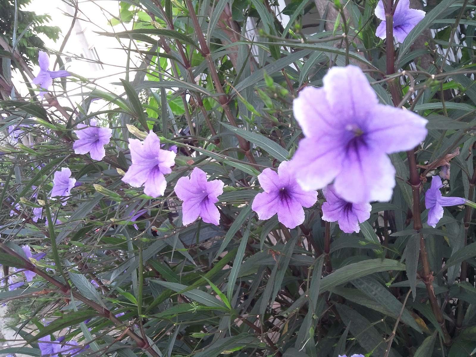 Hình ảnh hoa tím nhỏ đẹp