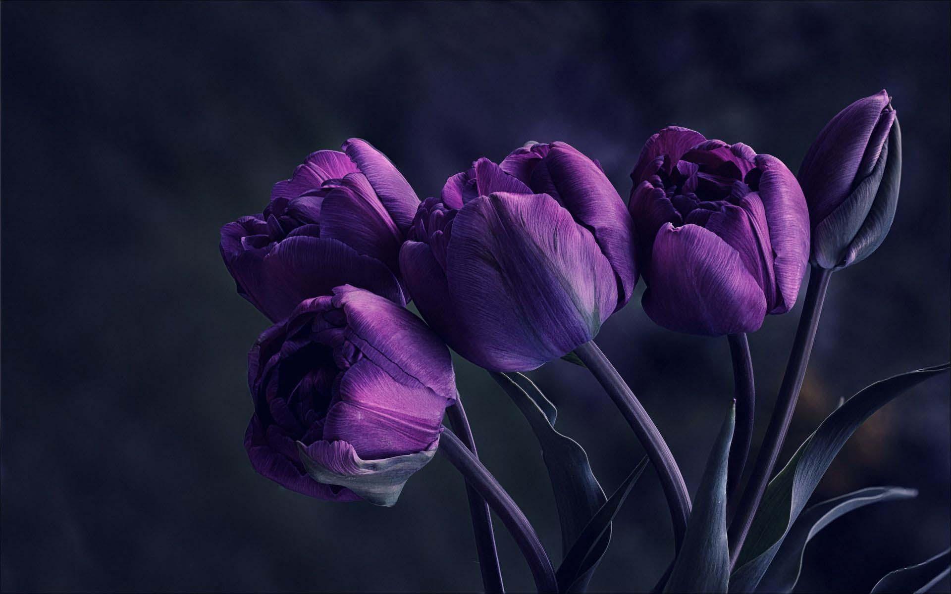Hình ảnh hoa tu líp tím đẹp