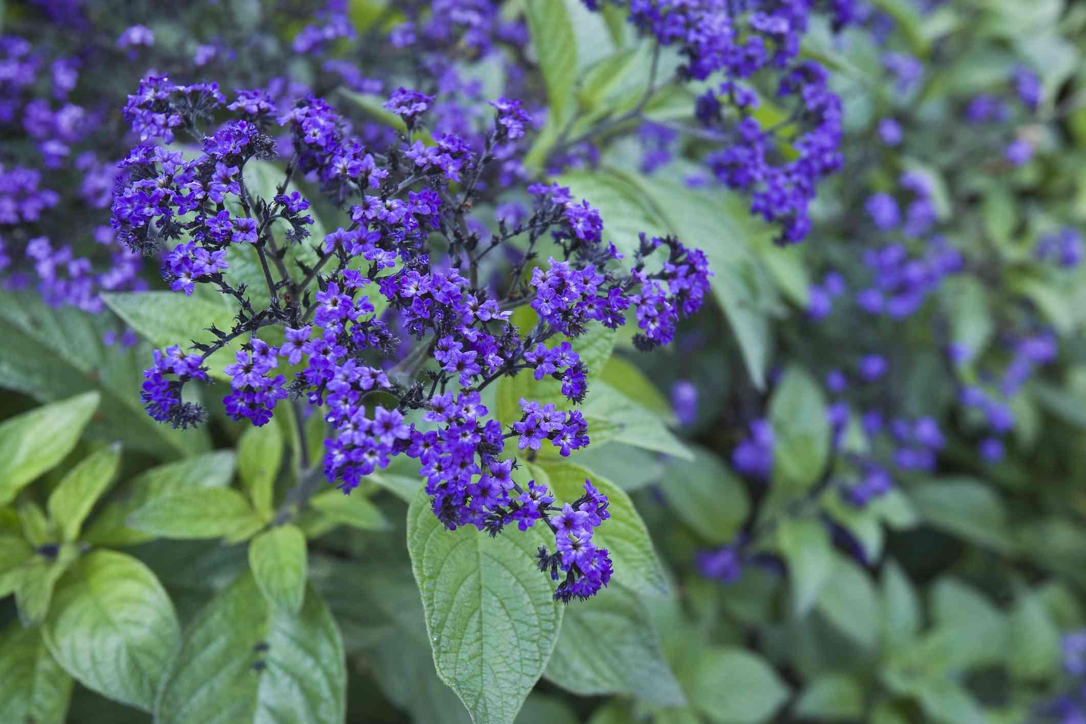 Hình ảnh những bông hoa tím trong thiên nhiên